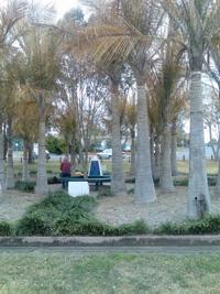Beaudesert Memorial Palm Garden