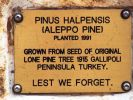 Tiaro Gallipoli Pine Memorial - dedication plaque